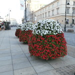 Patriotic Plants
